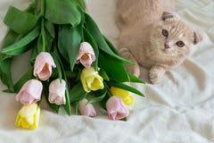 Gattino sveglio con il mazzo dei fiori Concetto di feste, buon compleanno immagini stock