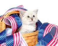 Gattino sveglio con il quarto delle decorazioni di luglio Fotografia Stock