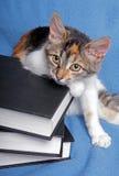 Gattino sveglio con libri Fotografia Stock