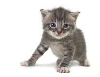 Gattino sveglio del bambino su una priorità bassa bianca Fotografia Stock
