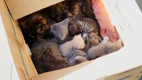 Gattino sveglio del tabby in una casella stock footage