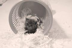 Gattino sveglio e piume bianche Immagini Stock Libere da Diritti