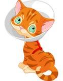 Gattino sveglio malato illustrazione di stock