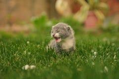 Gattino sveglio nei precedenti variopinti fotografie stock libere da diritti