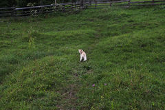 Gattino sveglio nel prato Fotografia Stock Libera da Diritti