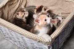 Gattino sveglio quattro Immagine Stock Libera da Diritti