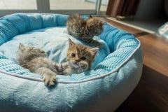 Gattino sveglio sul letto Fotografie Stock
