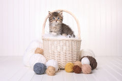 Gattino sveglio in un canestro con filato su bianco Fotografia Stock Libera da Diritti