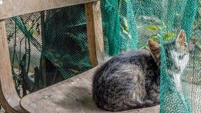 Gattino timido Fotografia Stock Libera da Diritti