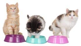 Gattino tre con le ciotole dell'alimento Immagini Stock