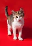 Gattino tricolore che sta sul rosso Fotografie Stock