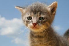 Gattino triste Fotografia Stock Libera da Diritti
