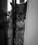 Gattino triste Immagini Stock Libere da Diritti