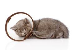 Gattino triste che indossa un collare dell'imbuto Su fondo bianco fotografie stock