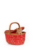 Gattino in un canestro fotografia stock libera da diritti