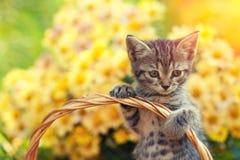 Gattino in un canestro con i fiori Fotografia Stock Libera da Diritti