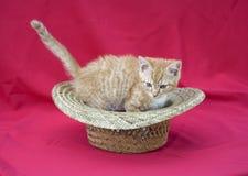 Gattino in un cappello fotografia stock