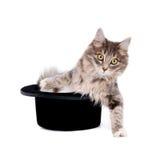 Gattino in un cappello Immagini Stock Libere da Diritti