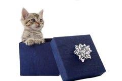 Gattino in un contenitore di regalo blu Immagini Stock