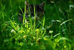 Gattino in un prato Immagine Stock Libera da Diritti