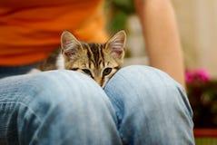 Gattino in un rivestimento Immagine Stock