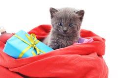 Gattino in una borsa di Natale con i regali Immagini Stock
