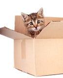 Gattino in una casella Immagini Stock
