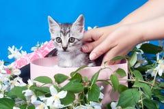 Gattino in una casella in fiori immagini stock libere da diritti