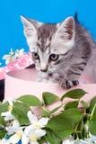 Gattino in una casella in fiori fotografie stock libere da diritti
