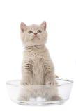 Gattino in una ciotola di vetro. Fotografia Stock Libera da Diritti