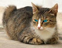 Gatto. Fotografia Stock