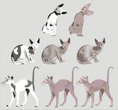 Gatto () Immagine Stock