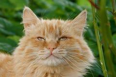 gatto Immagini Stock Libere da Diritti