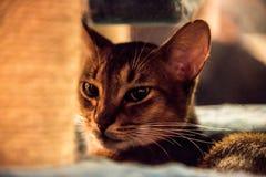 Gatto Fotografie Stock