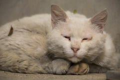 Gatto abbandonato Fotografia Stock Libera da Diritti