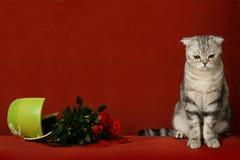 Gatto accusato e POT rotto dei fiori Fotografia Stock