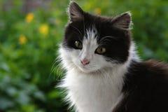gatto ad una passeggiata nel parco Fotografie Stock Libere da Diritti