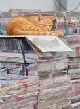 Gatto addormentato sul lavoro Fotografia Stock Libera da Diritti
