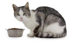 Gatto affamato Fotografia Stock