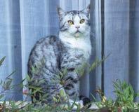 Gatto affamato con gli occhi verdi che aspettano alimento immagini stock