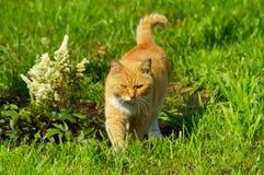 Gatto affascinante su erba nel parco Fotografie Stock