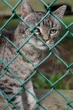 Gatto al riparo animale Fotografia Stock Libera da Diritti