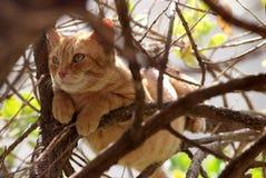 Gatto in albero Fotografia Stock Libera da Diritti