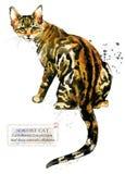 Gatto Animale domestico domestico razza della serie dei gatti Gattino sveglio illustrazione vettoriale