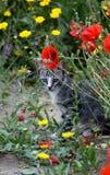 Gatto, animali domestici, Fotografie Stock