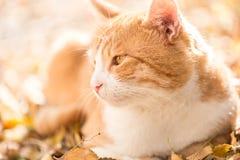 Gatto arancio fotografie stock libere da diritti