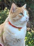 Gatto arancio Immagini Stock Libere da Diritti
