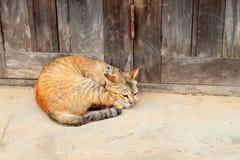 Gatto arancio di sonno fotografie stock libere da diritti