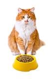 Gatto arancio e bianco con cibo per gatti Fotografia Stock Libera da Diritti