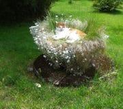 Gatto arancio e bianco nei fiori di primavera Immagini Stock